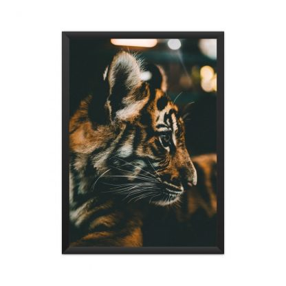 black framed A tiger cub in black background