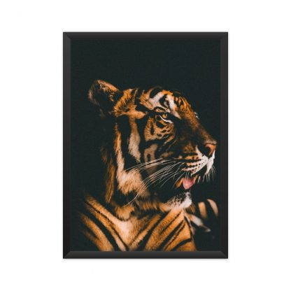 Framed tiger in black background
