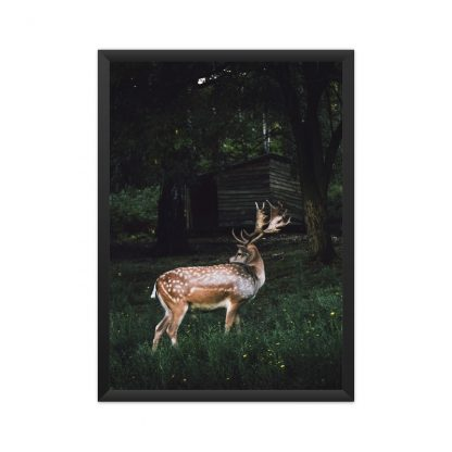 Framed deer in the forest