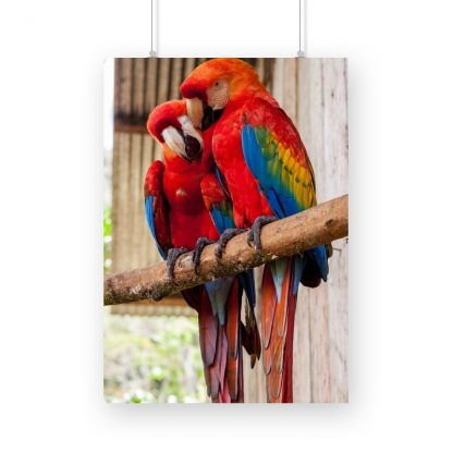 two multi colored parrots, mainly red in color, perched on a branch