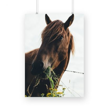 poster of a brown horse chewing on grass in UK
