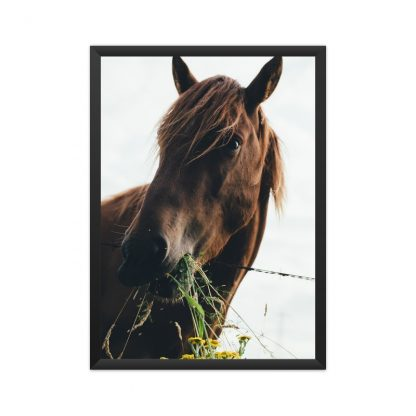 Black framed poster of a brown horse chewing on grass in UK