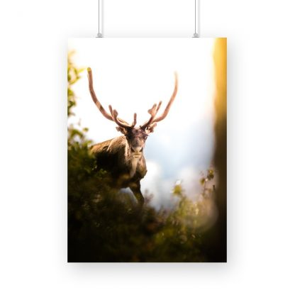 Male deer in spring poster