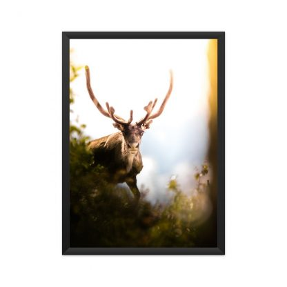 black framed Male deer in spring poster