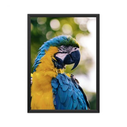 black poster poster of blue and yellow parrot, close up