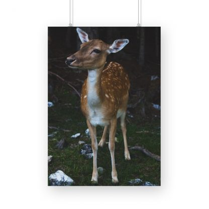 poster of a small deer in the forest background