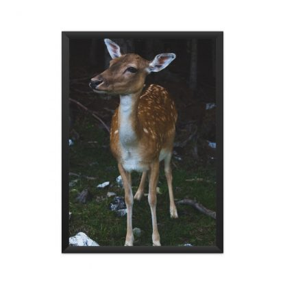 Black framed poster of a small deer in the forest background