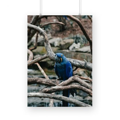 poster of blue parrot admist branches